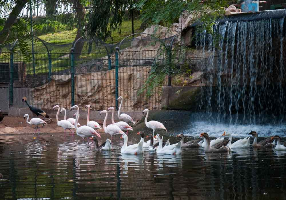 Flocks of flamingos in the valley of the birds